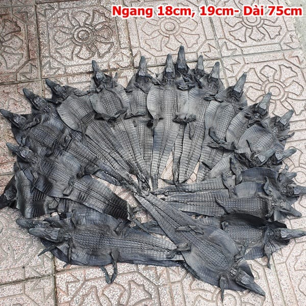 Da Ca Sau Nguyen Con Nho Ca Teppi Dai 75cm 3