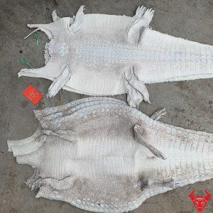 Da Cá Sấu Bạch Tạng Nguyên Tấm